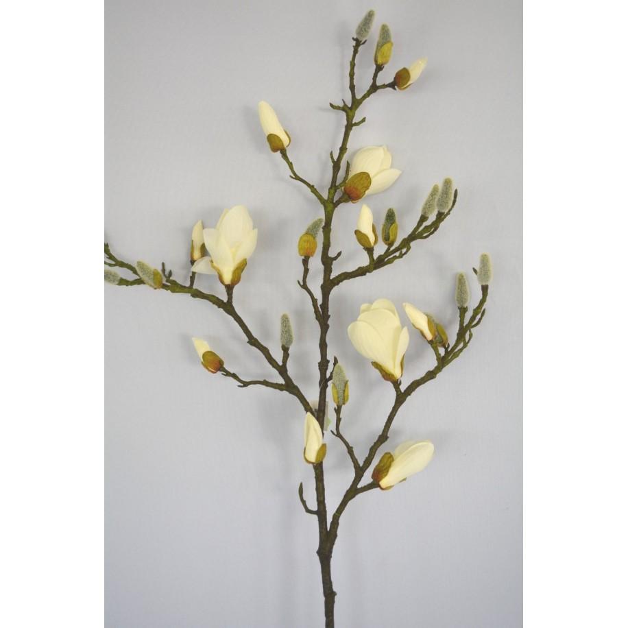 MagnolienZweig mit weißen Blüten